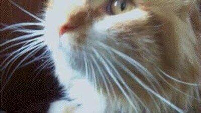 Enlace a La reacción de tu gato cuando te ve toser