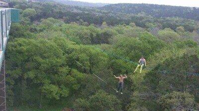 Enlace a Dando saltos y rebotando entre árboles