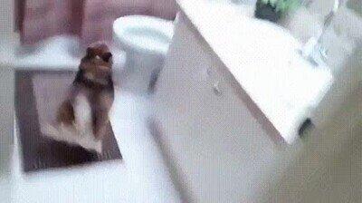 Enlace a Creo que mi perro me está diciendo que me de una ducha