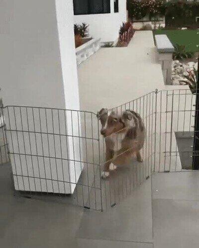 Enlace a Para este perro no existen barreras
