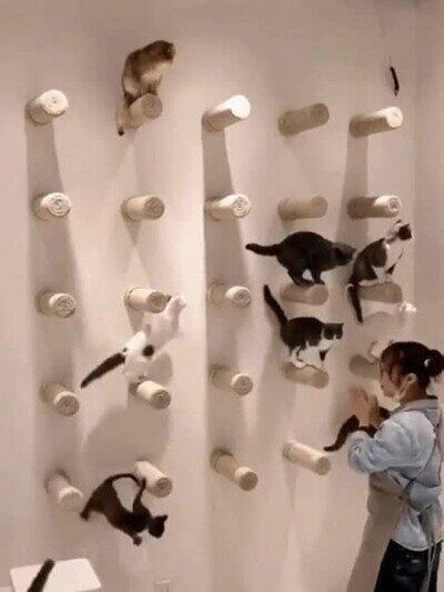 Enlace a La mejor forma de tener entretenidos a unos gatos