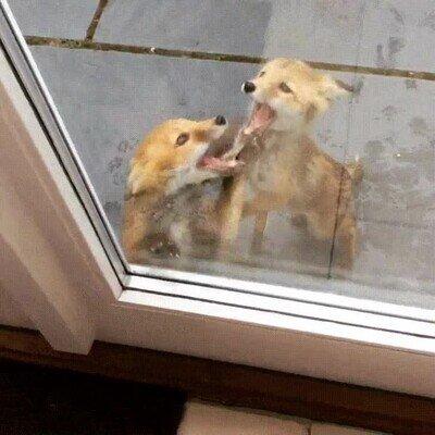 Por favor déjanos entrar