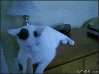 Enlace a Una lámpara que funciona con la nariz de tu gato