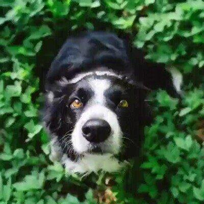 Enlace a Es una pasada ver un time lapse desde el hocico de un perro