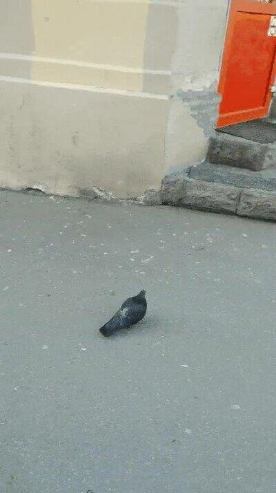 Enlace a Pájaro aprovechando un despiste para entrar en una tienda