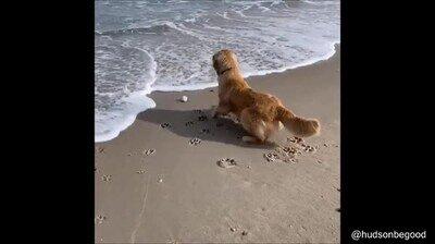 Perros que tienen miedo de las olas del mar