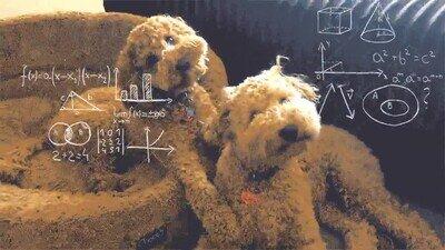 Enlace a Cuando les explicas a tus perros algo complicado