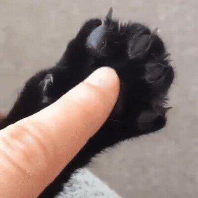 Todos los gatos hacen lo mismo cuando los tocas en ese punto