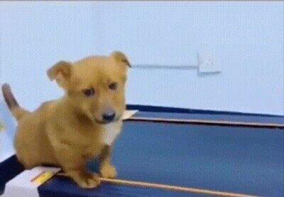 Enlace a Perros siendo perros