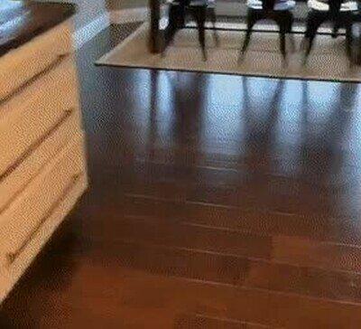 La reacción de mi perro cada vez que me preparo algo de comida