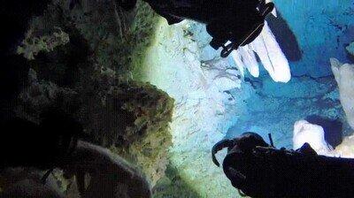 Enlace a El momento en que los buceadores descubren un jarrón maya de quizás 2000 años