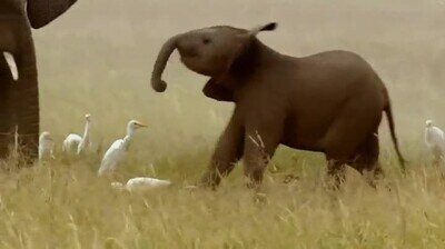Enlace a Este elefante bebé acaba de descubrir algo