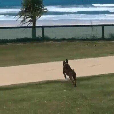 Enlace a Cuando dejen volver a la playa tras el confinamiento