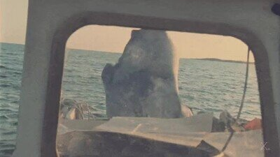 Enlace a No me acuerdo de esta escena de tiburón