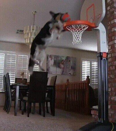 Enlace a Este perro ha aprovechado la cuarentena para mejorar sus aptitudes de baloncesto