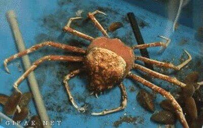 Enlace a Timelapse de un cangrejo saliendo de su exoesqueleto