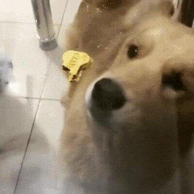 Enlace a Qué genial forma de trolear a este pobre perrito