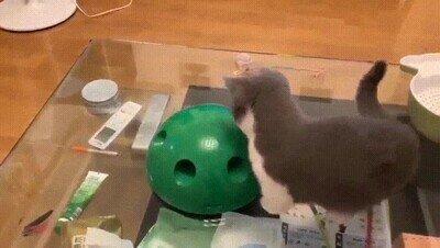 Enlace a El mejor juguete para tener entretenido a un gato