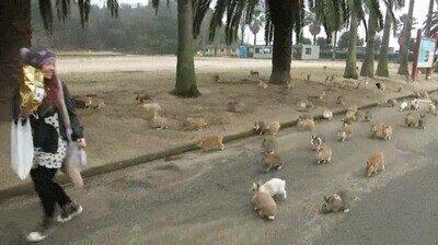 Enlace a El ataque de los conejos cariñosos