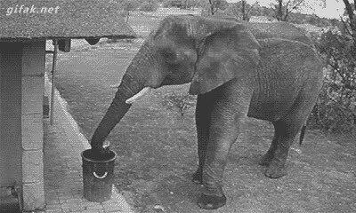 El elefante buen samaritano que recoge la basura y la tira en la papelera