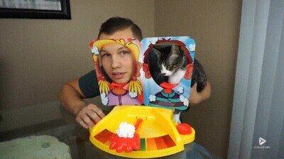 Enlace a Pobre gato, no tiene culpa que su dueño sea un tontaco