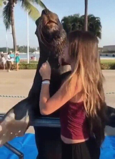 Enlace a Cuidado que el animalito tiene malas intenciones