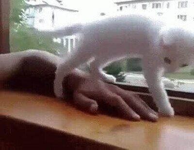 Enlace a Siempre que te caigas, ahí tendrás a tu gato para rescatarte