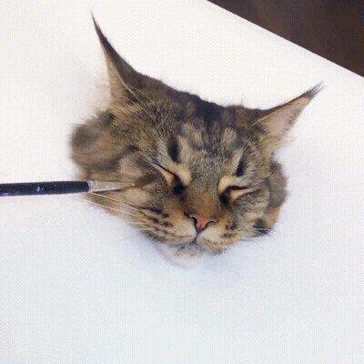 Enlace a Es la pintura más realista de un gato que he visto nunca