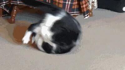 Enlace a Gatos que han jugado demasiadas horas a Dark Souls