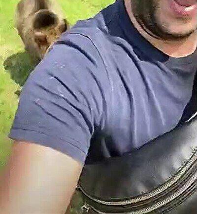 Enlace a Si le das comida a un oso, tendrás un amigo para toda la vida