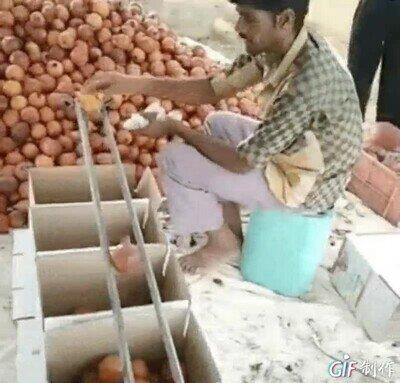 Enlace a Clasificando las cebollas por tamaño