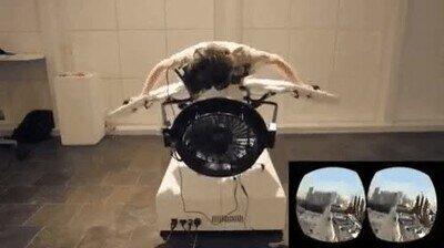 Enlace a Este simulador de pájaro VR tiene pinta de ser algo alucinante