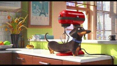 Enlace a Este perro va a pasarse muchas horas jugando con esa máquina