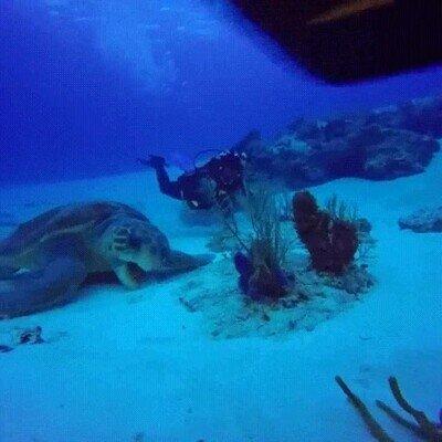 Enlace a Es increíble lo grandes que son las tortugas marinas comparadas con los humanos