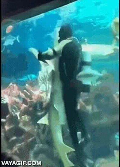 Enlace a Bailando con tiburones. Hay que tener un valor tremendo