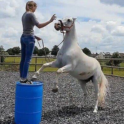 Enlace a Enseñándole un nuevo truco a su caballo. Acaba mal