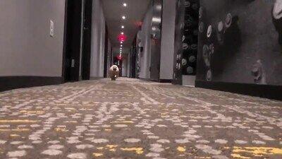 Enlace a Este perro protagoniza la carrera más épica del mundo