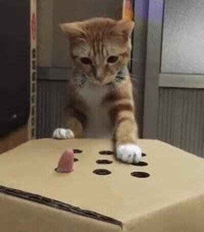 Enlace a Este gato jugando es lo más adorable que verás hoy