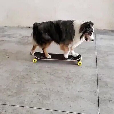 Enlace a Un perro ayudando a otro en skateboard