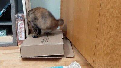 Enlace a Para hacer feliz a un gato solo tienes que darle una caja