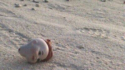 Enlace a De las cosas más aterradoras que puedes ver en la playa