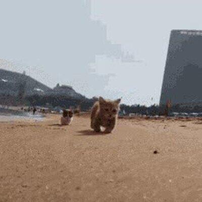 Enlace a Gatitos disfrutando de un día de playa