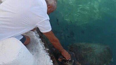 Enlace a Hay tortugas que solo quieren un poco de mimos