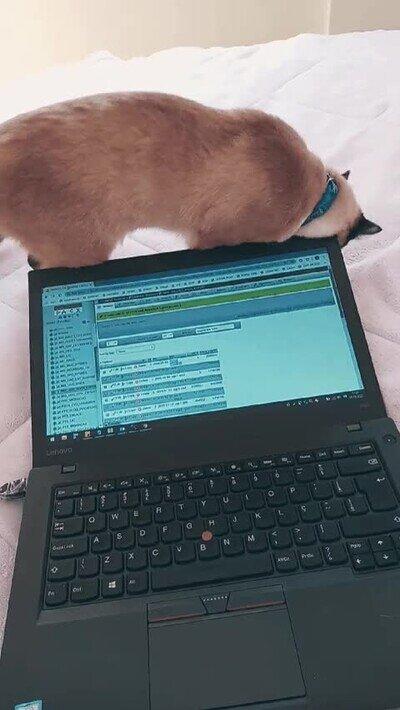 Enlace a Es imposible trabajar con un gatito cerca