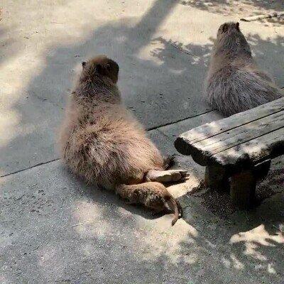 Enlace a La prueba de que los animales se trollean unos a otros