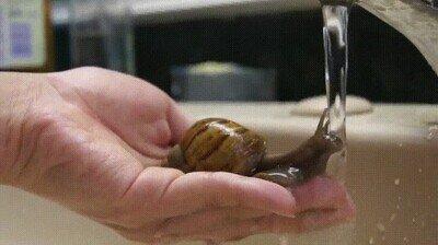 El agua es vida y los caracoles lo saben