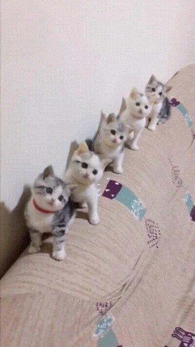 Enlace a Gatos mirando un partido de ping pong