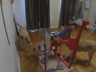Enlace a Perros que consiguen comida mediante una catapulta
