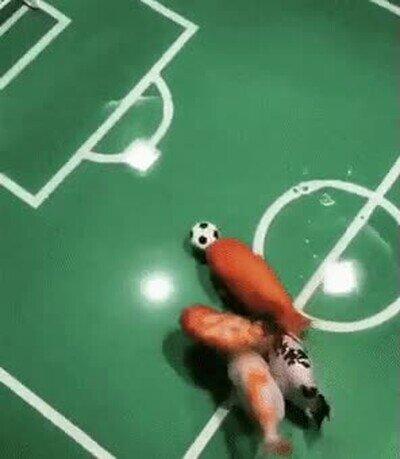 Enlace a Peces que han aprendido a jugar a fútbol