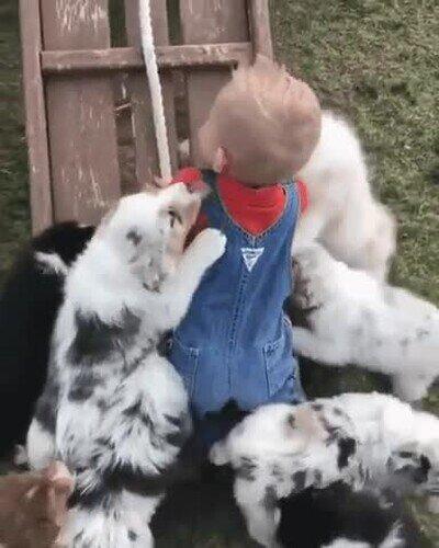 Enlace a Niño sobreviviendo al ataque de unos perros